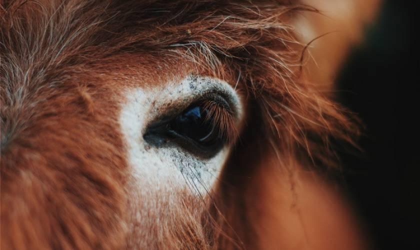 Elvenstar Horses Safe After Wildfire Evacuation