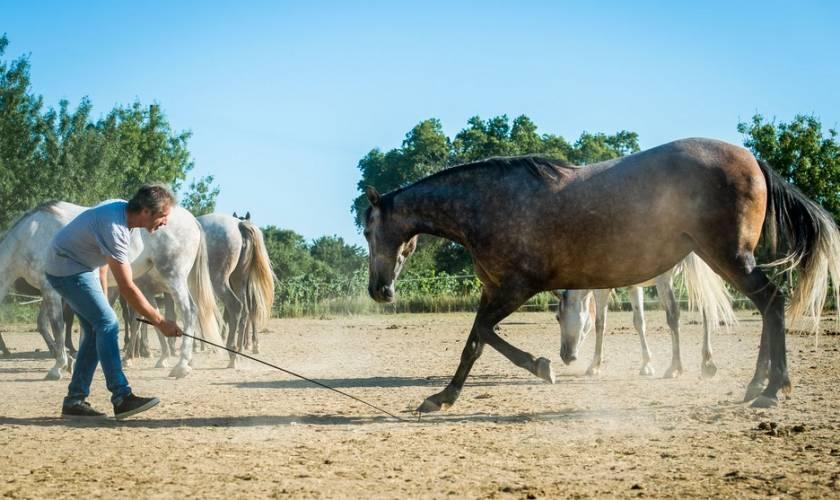Meeting Horse-Whisperer Jean-Francois Pignon